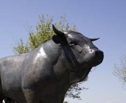 Camping Rodez Aveyron · le taureau de laguiole anais arnal tourisme aveyron uai